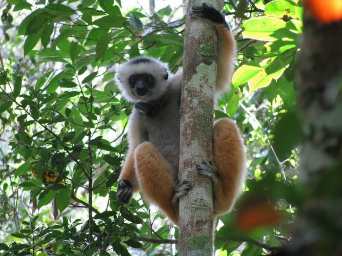 Visite du Parc national de Mantadia Andasibe